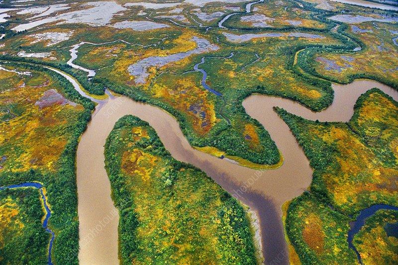 Wetlands, Copper River Delta, Alaska