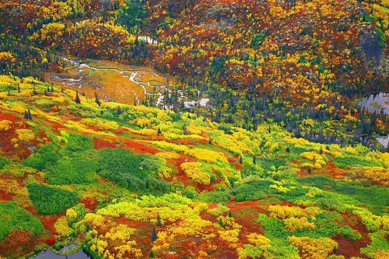 Fall colours, aerial view, Alaska