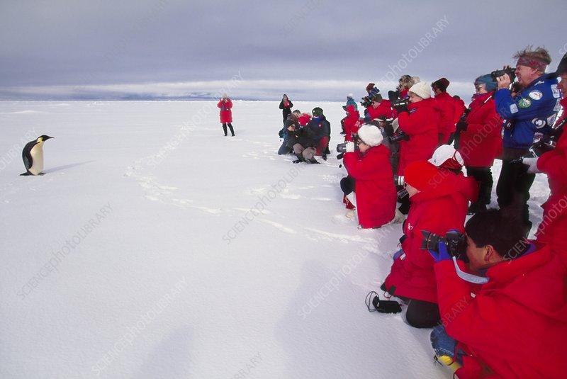 Tourists watching Emperor penguin