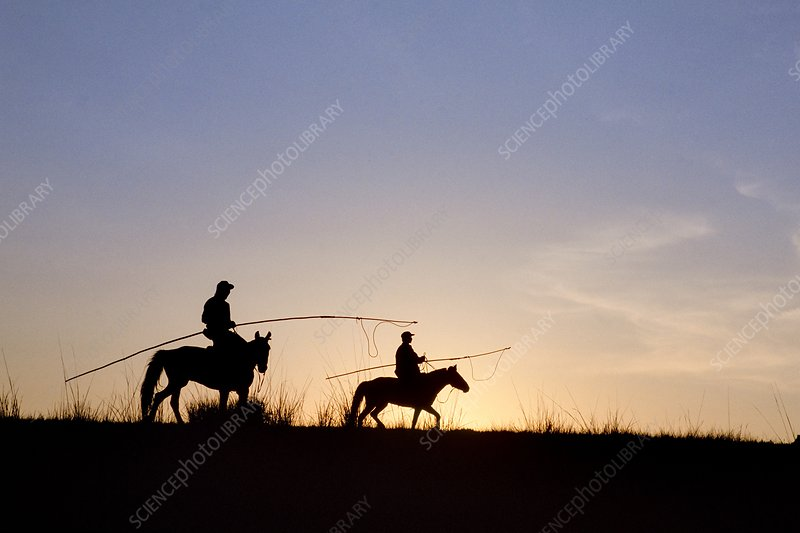 Horsemen at dawn in Mongolia