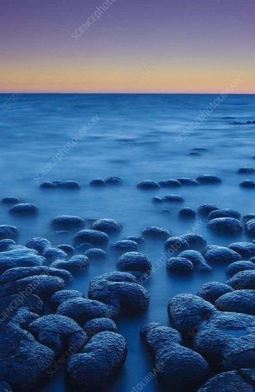 Stromatolites, Western Australia