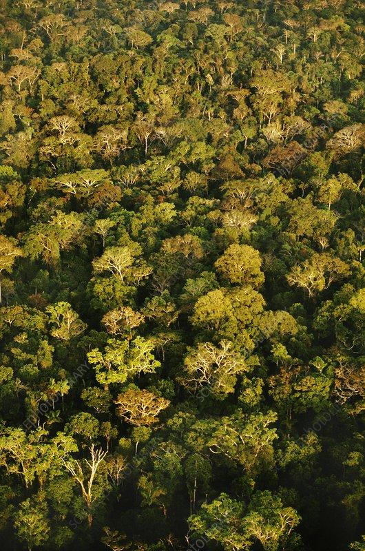 Lowland rainforest, aerial view, Borneo