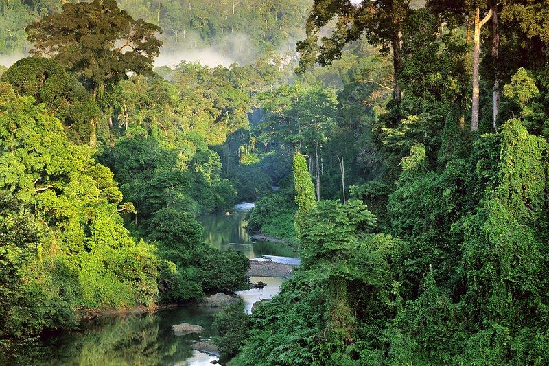 River in lowland rainforest, Danum Valley