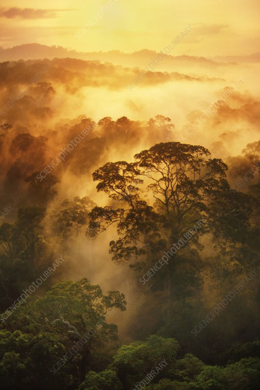 Sunrise over misty rainforest