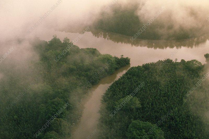 Mangroves along Kinabatangan River