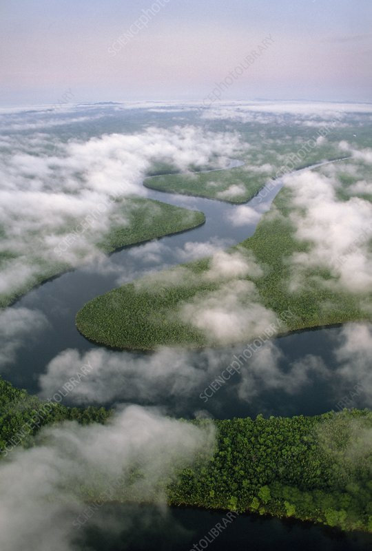 Rainforest and meandering river, Borneo