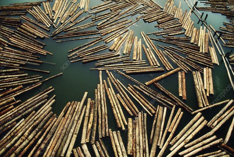 Rainforest logs floating near lumber mill