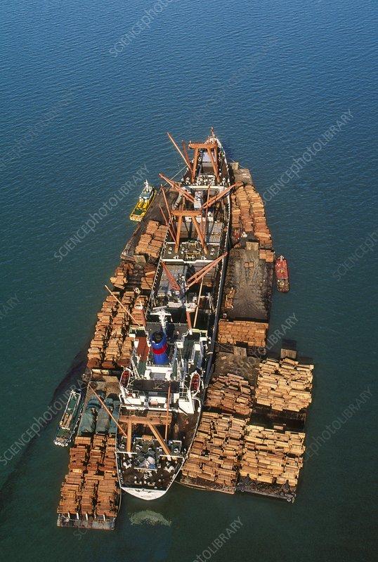 Rainforest lumber loaded on freighter
