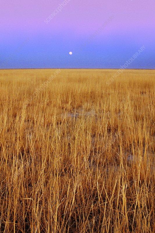 Full moon over grassland, Botswana