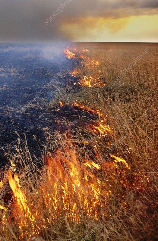 Brush fire during dry season, Botswana