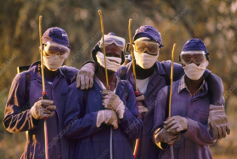 Workers spraying DDT to kill tsetse flies