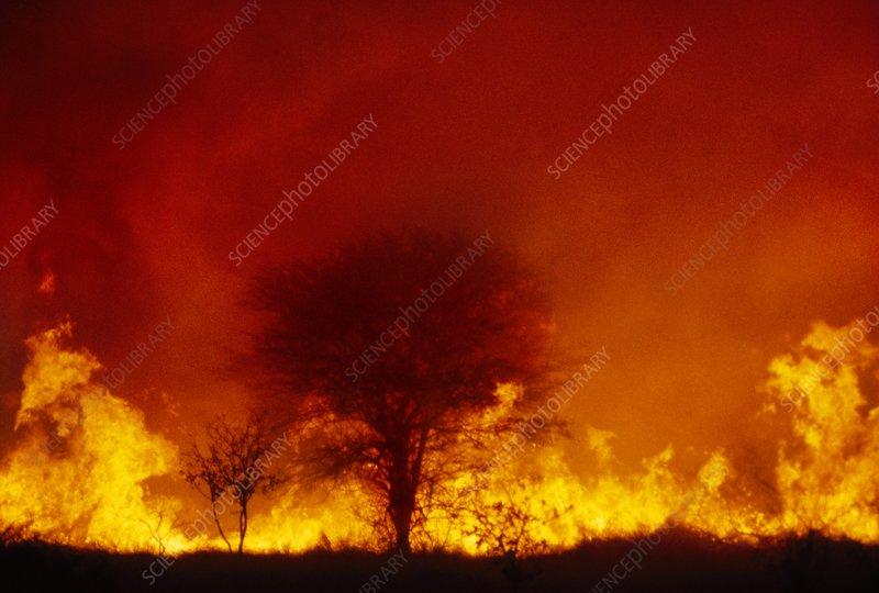Bushfire, Okavango Delta, Botswana