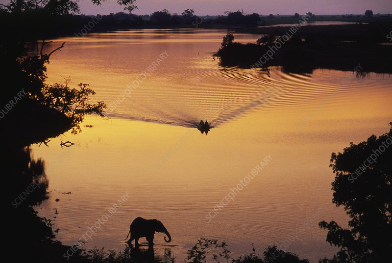 Tourists on boat on river, with elephant