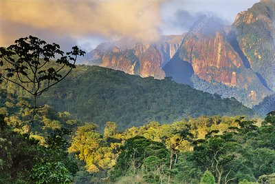Rainforest and granite mountains, Brazil