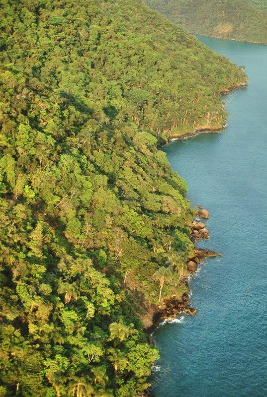 Atlantic rainforest near Rio de Janeiro