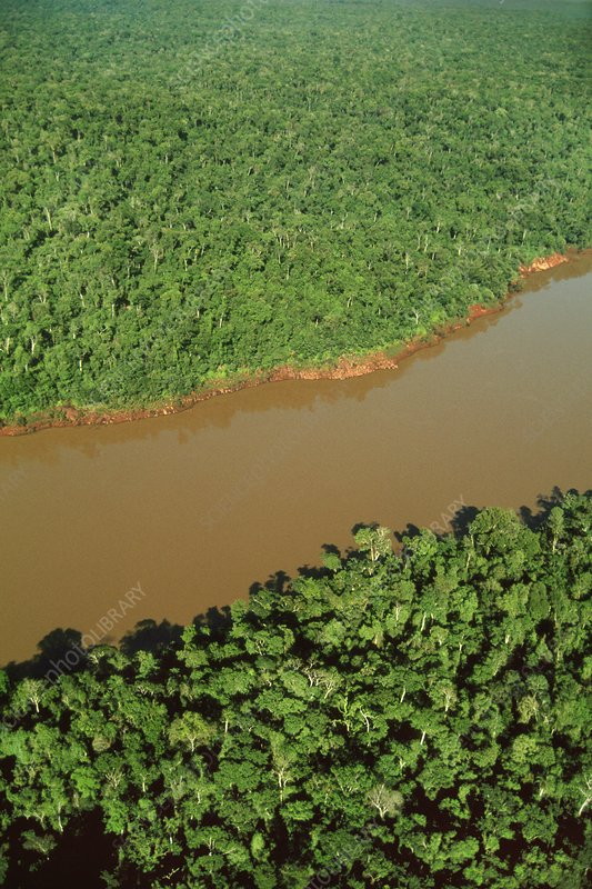 Atlantic rainforest viewed from the air