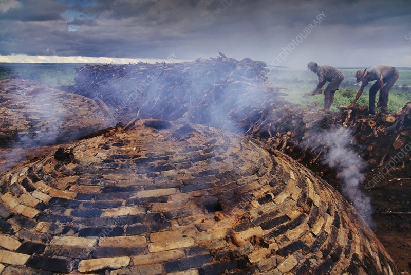 Charcoalers burn old growth cerrado trees