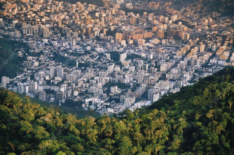 Rainforest next to city, Rio de Janeiro