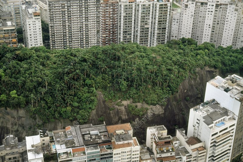 Forest surrounded by buildings, Brazil