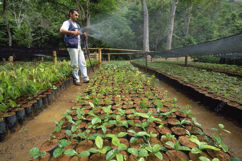 Reforestation nursery, Brazil