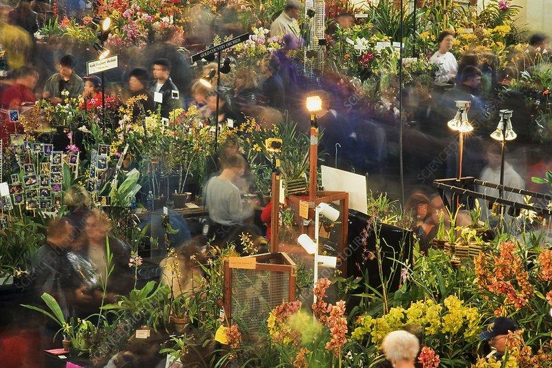 Visitors at San Francisco Orchid Show