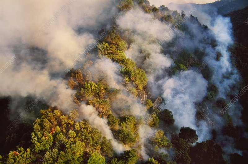 Forest fire, aerial view, California