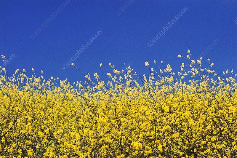 Wildflowers on the coast of Big Sur