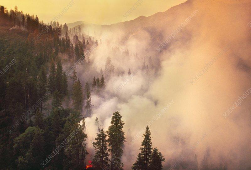 Forest fire, Big Sur, California