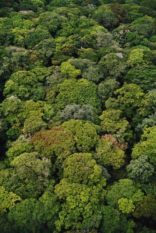 Rainforest canopy aerial view, Congo