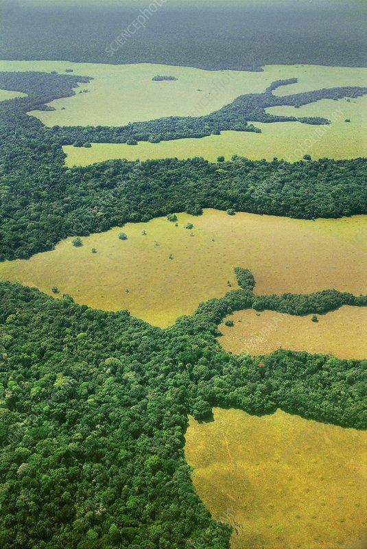 Mixed forest and savannah habitat, Congo