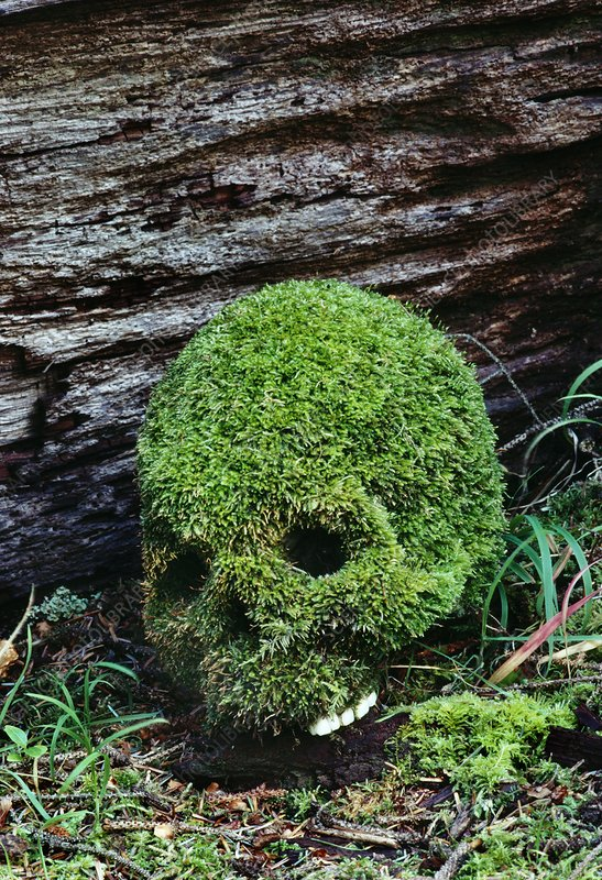 Moss growing on human skull in cemetery