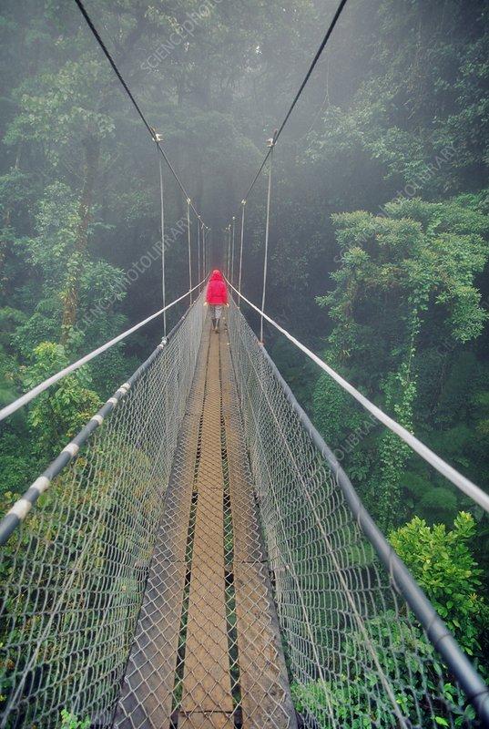 Hiker on canopy walkway, Costa Rica
