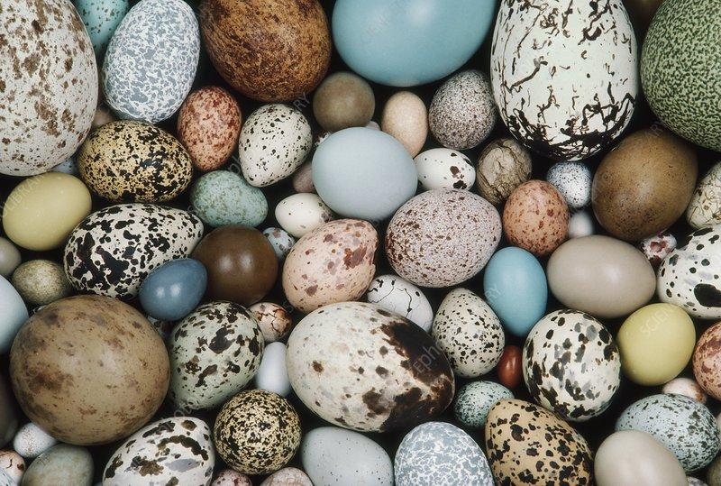Bird egg collection, California
