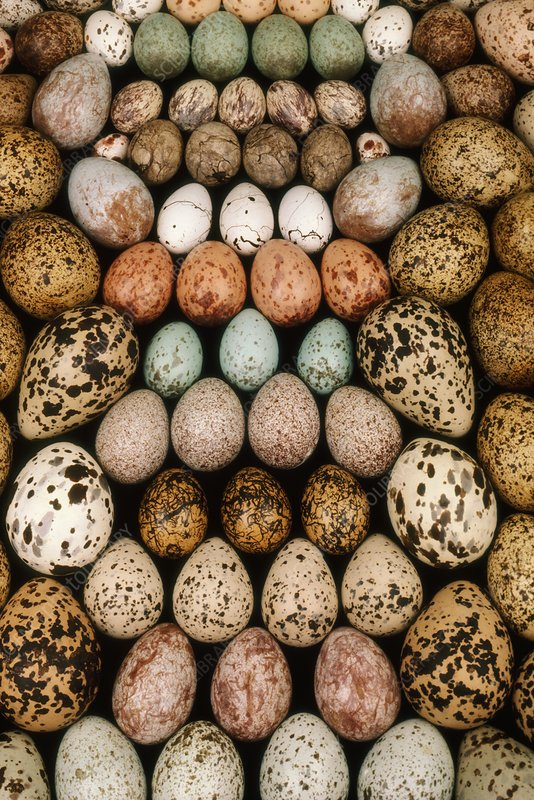 Bird egg collection, California