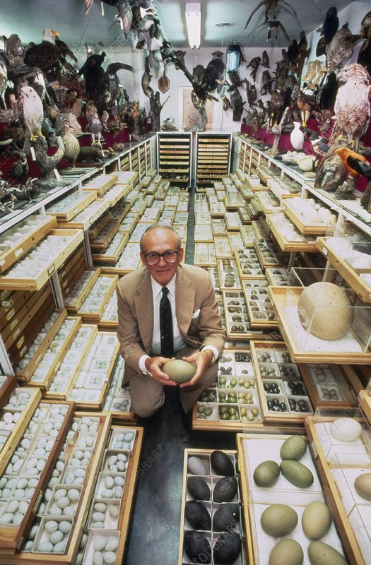 Largest bird egg collection in the world