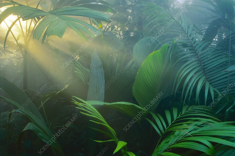 Rainforest vegetation, foliage and palms