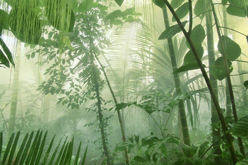 Rainforest trees and foliage