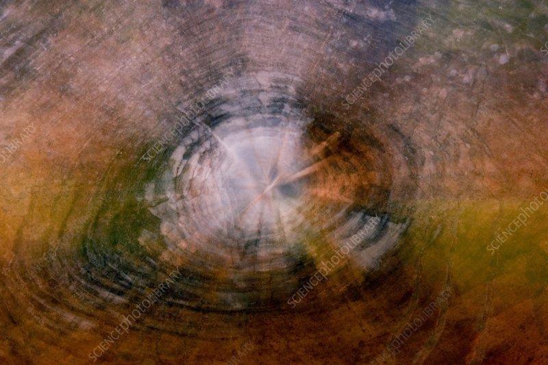 Petrified wood impression, Arizona,