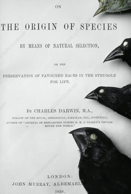 The Origin of Species first edition book