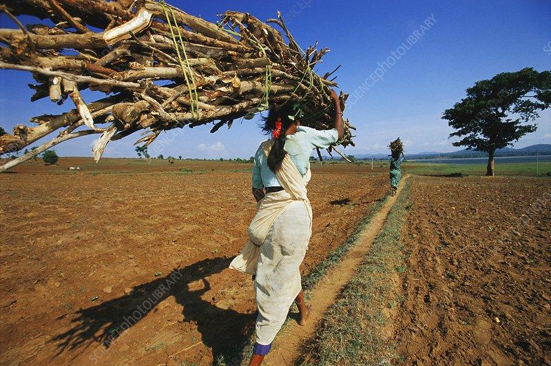 Women with firewood, Nagarahole, India