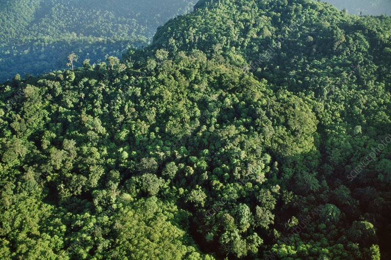 Monsoon forest, Nilgiri, India