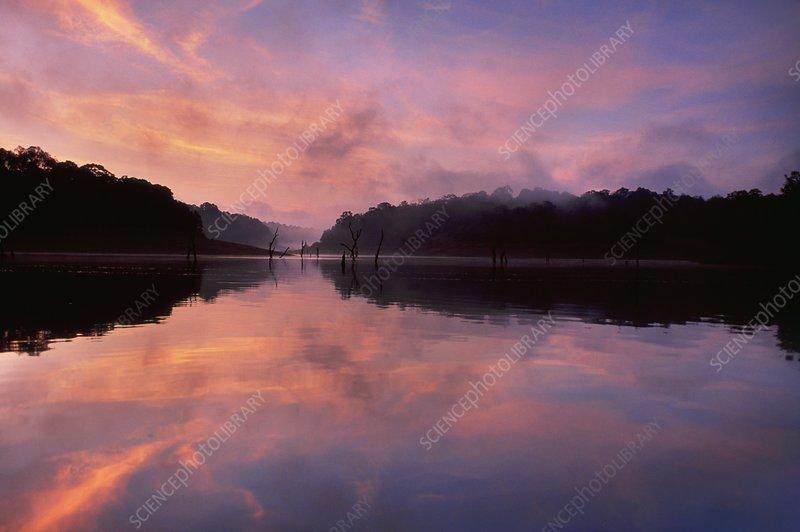 Lake at dawn, Periyar, India