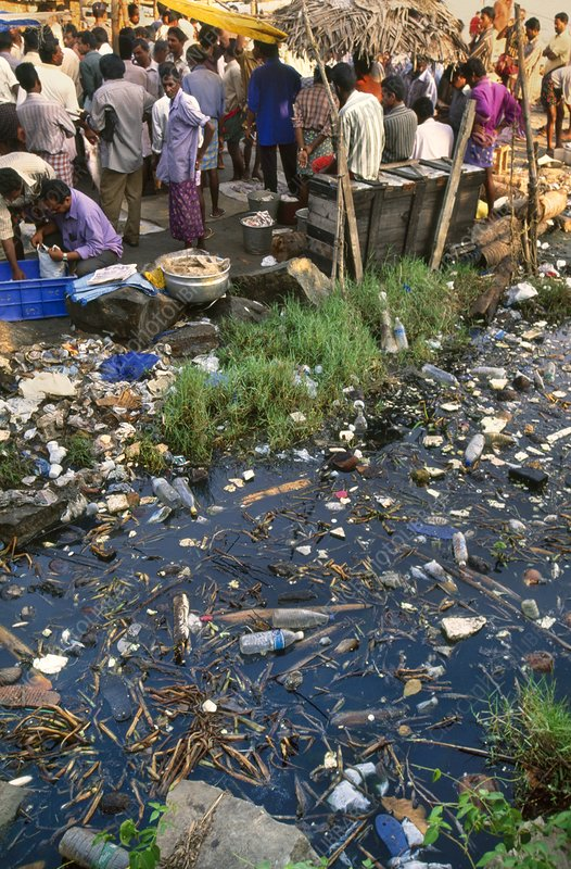 Polluted waterway near market, Cochin