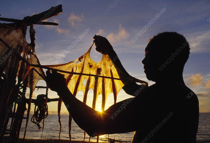 Vezo fisherman drying squid, Madagascar