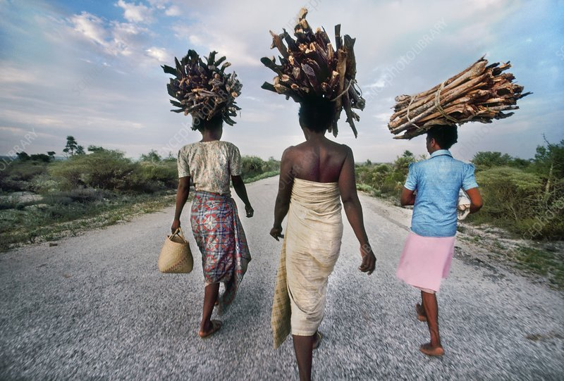 Antandroy women carrying firewood