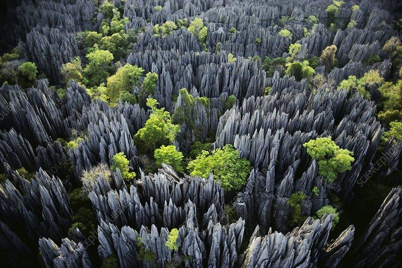 Eroded limestone pinnacles, Madagascar