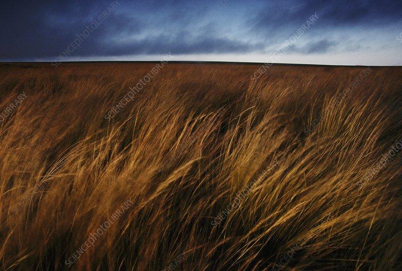 Stormy sky over grassland, Horombe