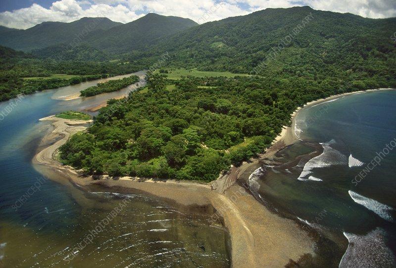 Lowland rainforest, Masoala, Madagascar