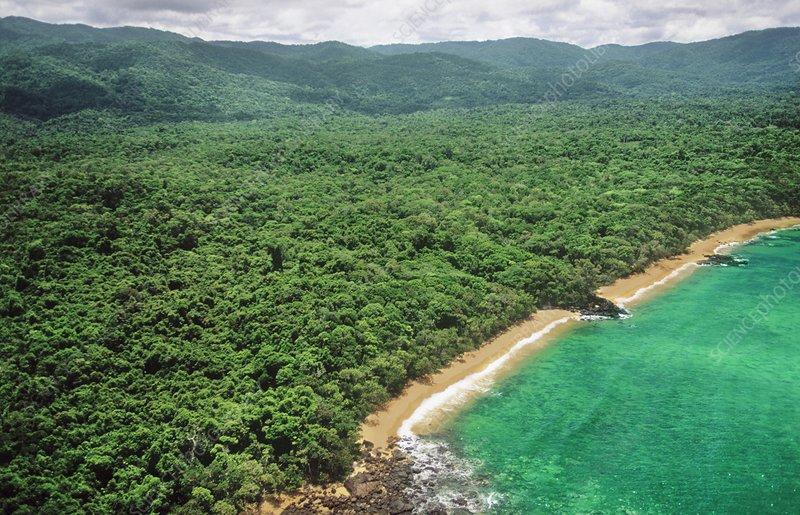 Virgin lowland rainforest, Masoala