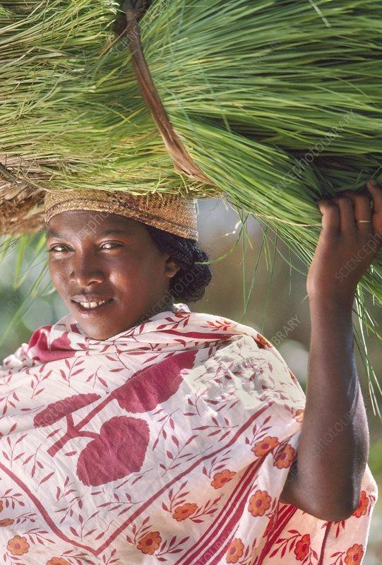 Betsileo woman carrying rice plants